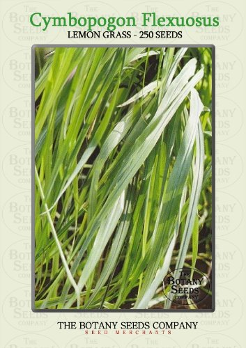 Lemon Grass (250) Seeds - Cymbopogon Flexuosus - Herb Seeds