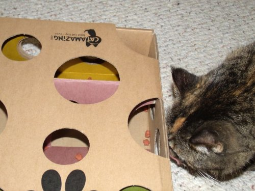 crave cat food reviews