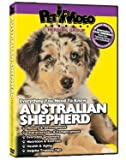 Australian Shepherd DVD - Everything You Should Know About Your Dog