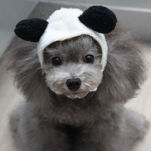 Wildf (Pet Panda Costume)