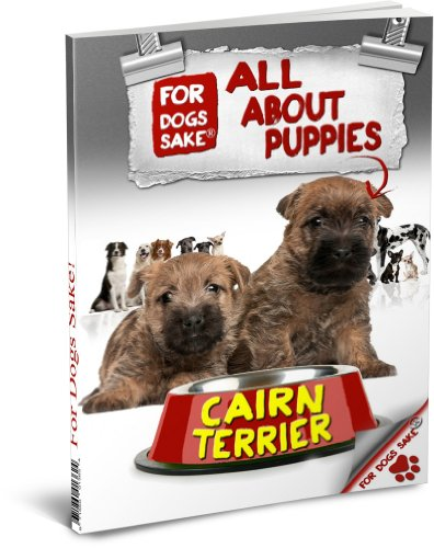 All About Cairn Terrier Puppies
