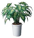 コクヨS&T 人工植物(アイレストグリーン) ゴールデンディフェンバキア PX-GD500