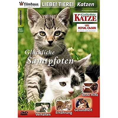 DVD �ber Katzen