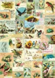 Cavallini & Co. Vintage Birds Decorative Decoupage Poster Wrapping Paper Sheet