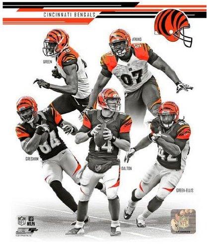 Cincinnati Bengals 2013 Nfl Team Composite Photo 8X10