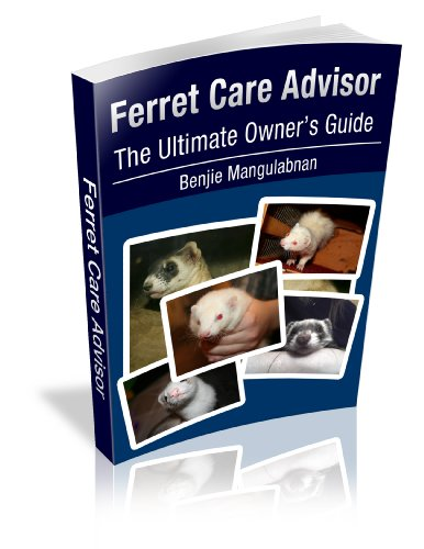 Learning About Ferret Care