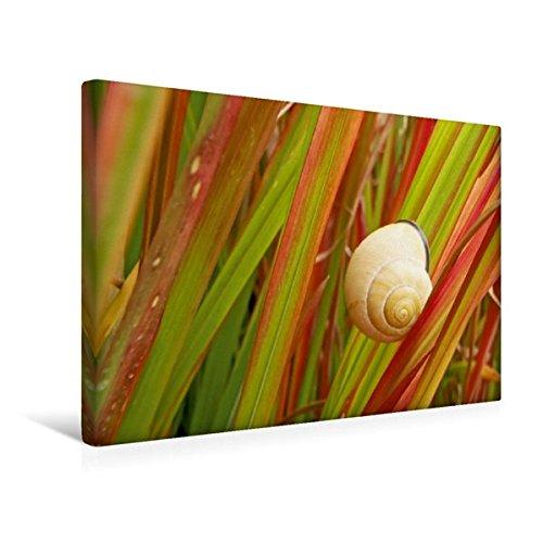 premium-textil-leinwand-45-cm-x-30-cm-quer-rote-rutenhirse-wandbild-bild-auf-keilrahmen-fertigbild-a