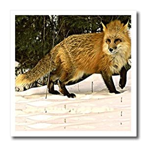 ht_771_1 Wild animals - Red Fox - Iron on Heat Transfers - 8x8 Iron on Heat Transfer for White Material