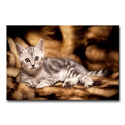 Wall Art Painting Gray Kitten Lyingin The Sofa Pictures Prints On Canvas Animal The Picture Decor Oil For Home Modern Decoration Print For Girls Room