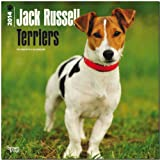 Jack Russell Terriers 2014 Wall BrownTrout