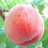 山梨の 桃 夏の香り産地直送もも品種により入り数が変わるだけの わけあり 訳あり グルメ お中元