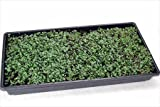 "5 Pack of Durable Black Plastic Wheatgrass Growing Trays (Without Holes) 21"" X 11"" X 2"" - Flowers, Seedlings, Plants"