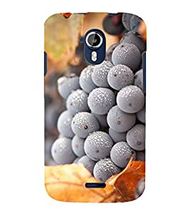 FROZEN BLUEBERRY PIC 3D Hard Polycarbonate Designer Back Case Cover for Micromax Canvas Magnus A117