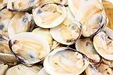 片貝はまぐり1kg!使いやすいボイルはまぐり【ひな祭り】【築地】【焼きハマグリ】【潮汁】【鍋】【はまぐり】【ハマグリ】【蛤】【お吸い物】【澄まし汁】【節句】【酒蒸し】【バター焼き】【レシピ】【ギフト】