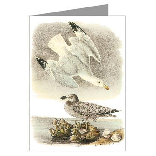 12-biglietti-di-john-james-audubon-s-celebrata-illustrazioni-di-uccelli-del-nord-america-motivo-spin