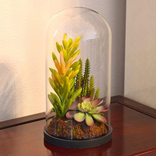 Modern Glass Dome Bell Jar Design Artificial Succulent Plant Tabletop Centerpiece Display Terrarium Vase
