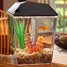 1 Gallon Aquarium Fish Tank Starter Kit with Black Lid 3.78 Liter