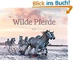 Wilde Pferde 2017