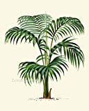 Palm-Tree-Art-Print-Set-of-4-Antique-Beautiful-Green-Plants-Tropical-Garden-Nature-Home-Room-Wall-Decor-Unframed-LPH