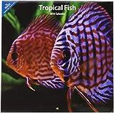 Tropical Fish 2014 Wall Calendar