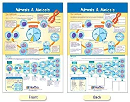 SEOH Mitosis & Meiosis Bulletin Board Chart