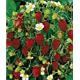 Seeds and Things Alpine strawberries are ideal to grow in a patio container garden! 25 Seeds-