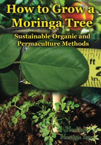 How to Grow a Moringa Tree: Sustainable Organic and Permaculture Methods