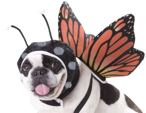Animal Planet Pet20101 Butterfly Dog Costume, X-Small front-991407