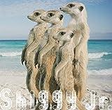 サマータイムラブ(初回限定盤)(DVD付) - Shiggy Jr.