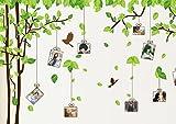 ウォールステッカー 木&フォトフレーム 写真フレーム 鳥 バード Bird 葉 Leaf 葉 枝 緑