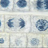 Onion Mitosis Slide, l.s., 10 m, Hematoxylin