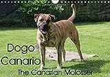 Dogo Canario, the Canarian Molosser (Wall Calendar 2017 DIN A4 Landscape): The Dogo Canario is a Spanish breed, native to the Canary Islands (Birthday calendar, 14 pages ) (Calvendo Animals)