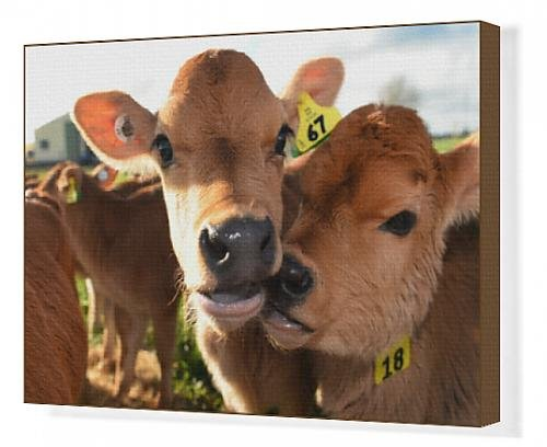canvas-print-of-nzealand-farm-agriculture