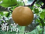 【送料無料】熊本の梨・新高10個入り(5kg) (のし付けられます) 梨の通販(梨の田尻園) ランキングお取り寄せ