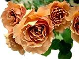 アフタヌーンティ 【茶色】 20本 ◆バラの花束◆