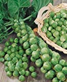 Long Island Improved Brussel Sprouts Seeds - Brassica Oleracea Var. Gemmifera - 1 Grams - Approx 280 Gardening Seeds - Vegetable Garden Seed