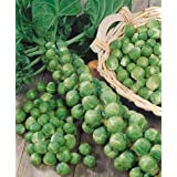 Brussels Sprouts Long Island (Small Ornamental Cabbage) Edible, 50 Seeds Pack By Seedscare