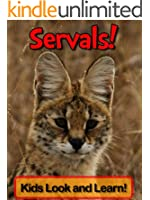 Servals! Learn About Servals and Enjoy Colorful Pictures - Look and Learn! (50+ Photos of Servals)