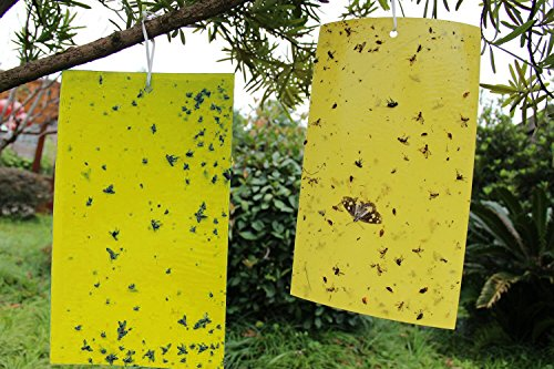 kinglaker-10-pcs-dual-sided-yellow-sticky-fly-traps-paper-stickers-for-white-flies-aphids-fungus-gna