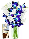 Set Sail with Blue and White Dendrobium Orchids and Scharffen Berger Chocolates (10 Stems) – With…