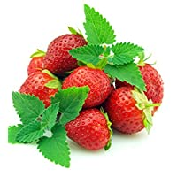 Strawberry Mint - Grow Indoors or Out - 4