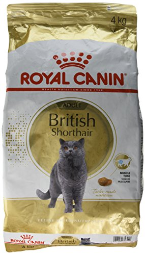 royal canin feline british shorthair 1er pack 1 x 4 kg beutel katzenfu 03rcbsh4k royal canin. Black Bedroom Furniture Sets. Home Design Ideas