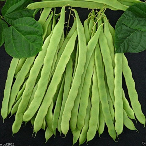 8 oz, Kentucky Wonder 125 Bush Bean, Seeds, Organic Heirloom Bean 40-45 days (Bush Beans 8 Oz compare prices)