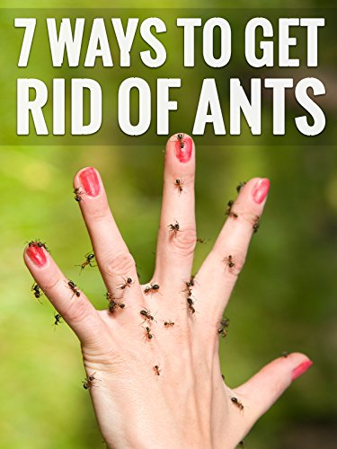7-genius-ways-to-get-rid-of-ants