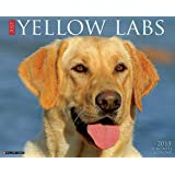 Just Yellow Labs 2015 Wall Calendar (Just (Willow Creek))