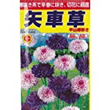 平山寒咲 矢車草 (春、秋まき) (924)