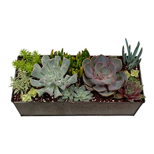 Shop Succulents Industrial Succulent Centerpiece Design