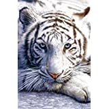 White Tiger - Maxi Poster - 61 cm x 91.5 cmby Gb Posters