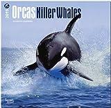 Orcas, Killer Whales 2015 Square 12x12