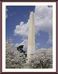 Festival of Cherry Blossoms at the Washington Monument - Beautiful approx. 24x28-inch Framed & Matted Photographic Print by Carol M. Highsmith